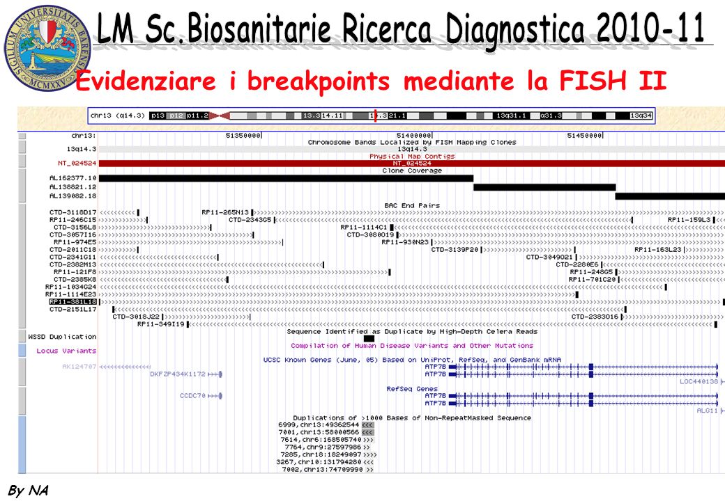 Evidenziare i breakpoints mediante la FISH II