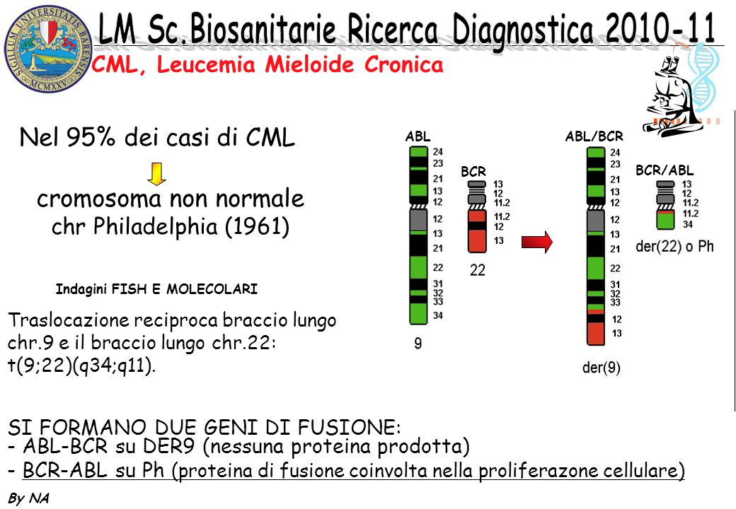CML, Leucemia Mieloide Cronica