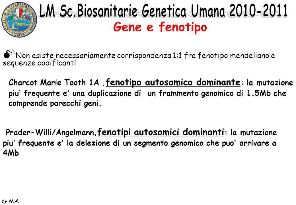 Gene e fenotipoNon esiste necessariamente corrispondenza 1:1 fra fenotipo mendeliano e sequenze codificanti.