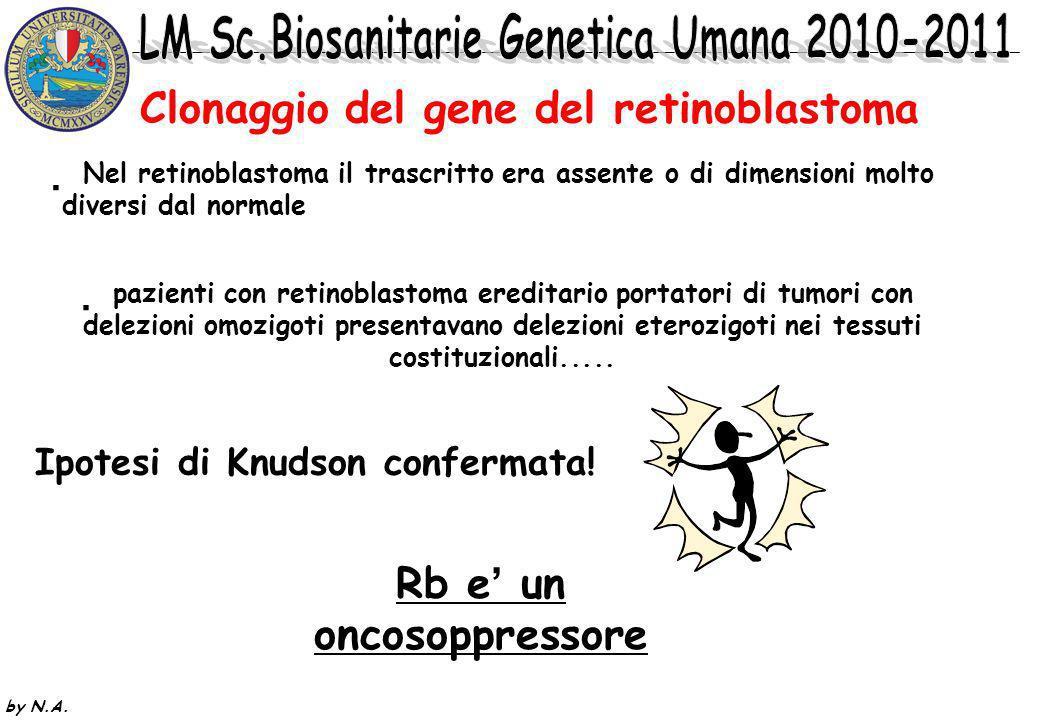 Clonaggio del gene del retinoblastoma
