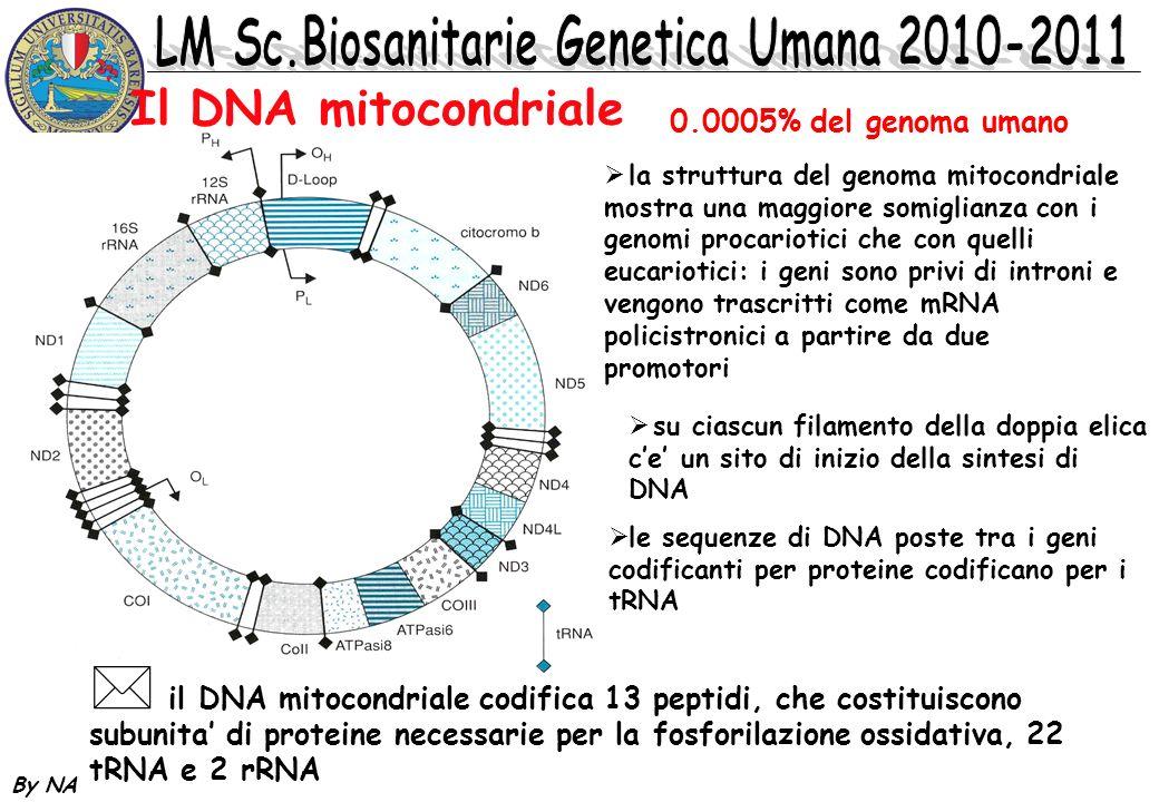 Il DNA mitocondriale 0.0005% del genoma umano