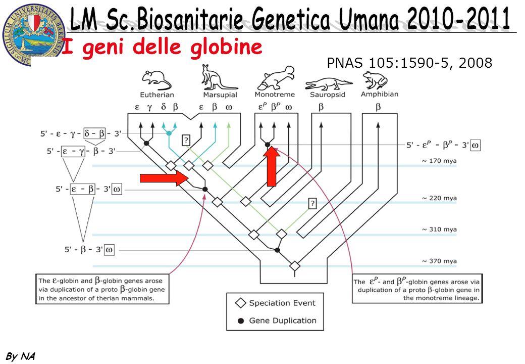 I geni delle globine PNAS 105:1590-5, 2008 By NA