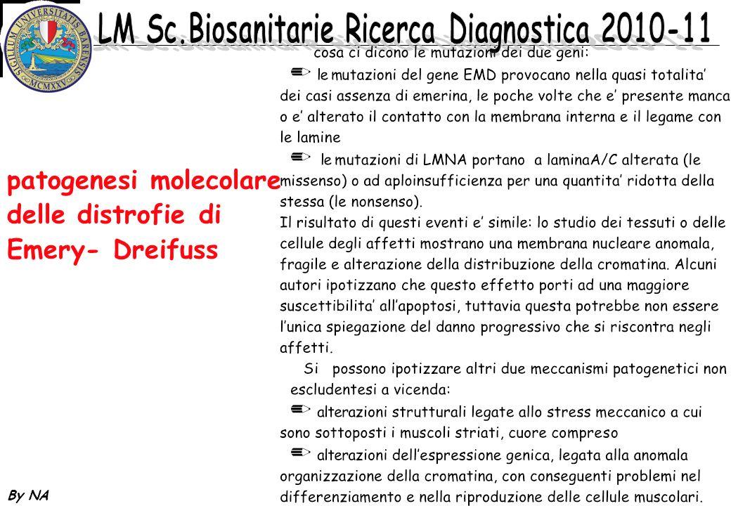 patogenesi molecolare delle distrofie di Emery- Dreifuss