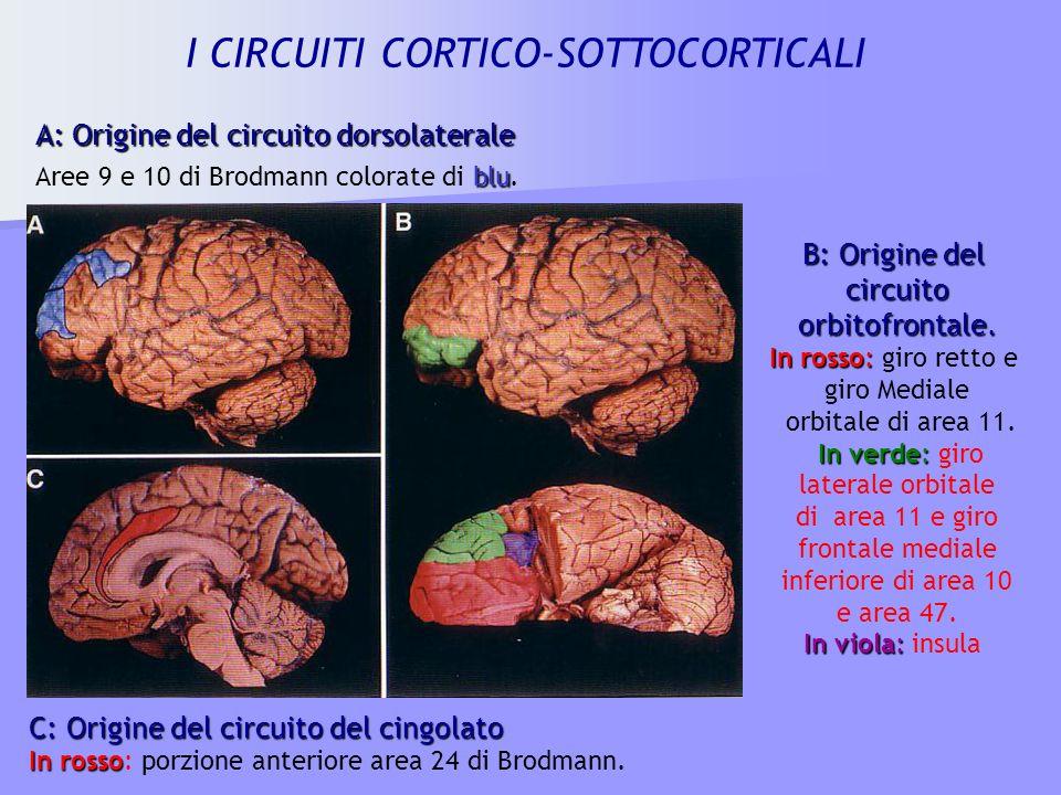 I CIRCUITI CORTICO-SOTTOCORTICALI