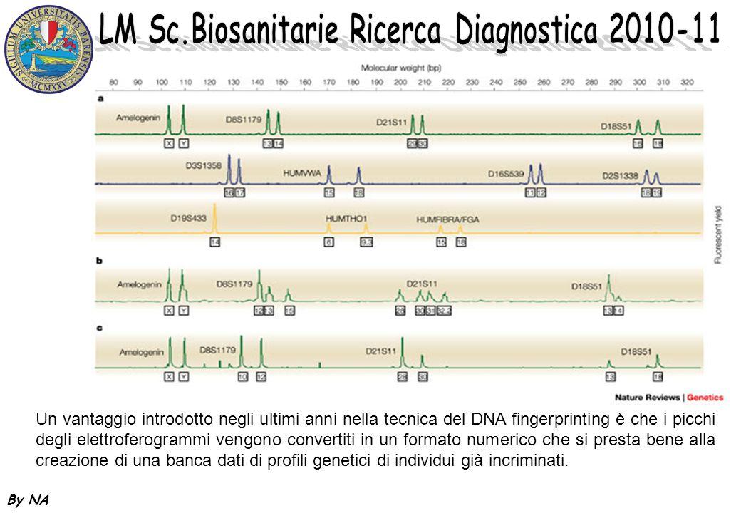 Un vantaggio introdotto negli ultimi anni nella tecnica del DNA fingerprinting è che i picchi degli elettroferogrammi vengono convertiti in un formato numerico che si presta bene alla creazione di una banca dati di profili genetici di individui già incriminati.