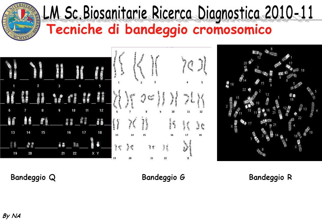 Tecniche di bandeggio cromosomico
