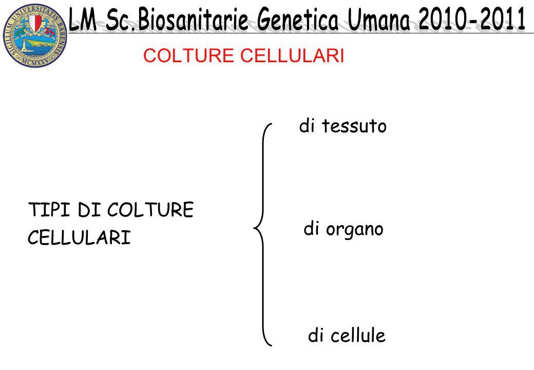 COLTURE CELLULARI di tessuto TIPI DI COLTURE CELLULARI di organo di cellule