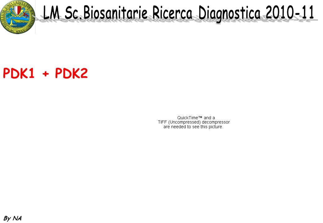 PDK1 + PDK2 By NA