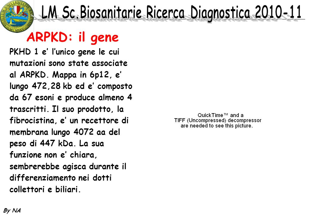 ARPKD: il gene