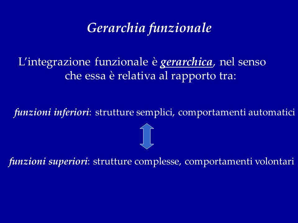 Gerarchia funzionale L'integrazione funzionale è gerarchica, nel senso che essa è relativa al rapporto tra: