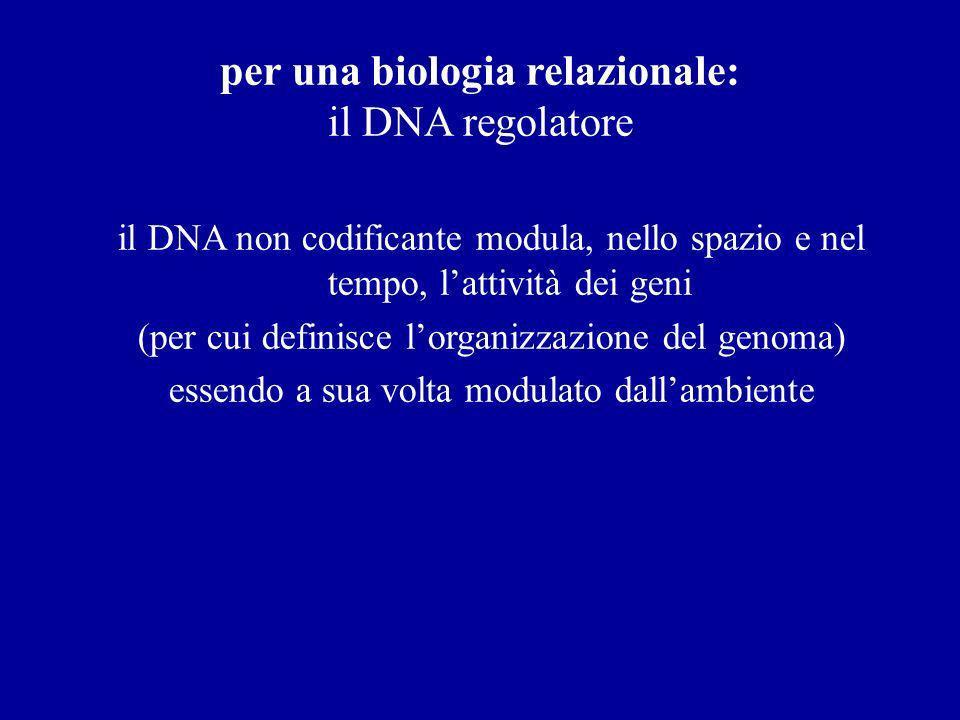 per una biologia relazionale: il DNA regolatore