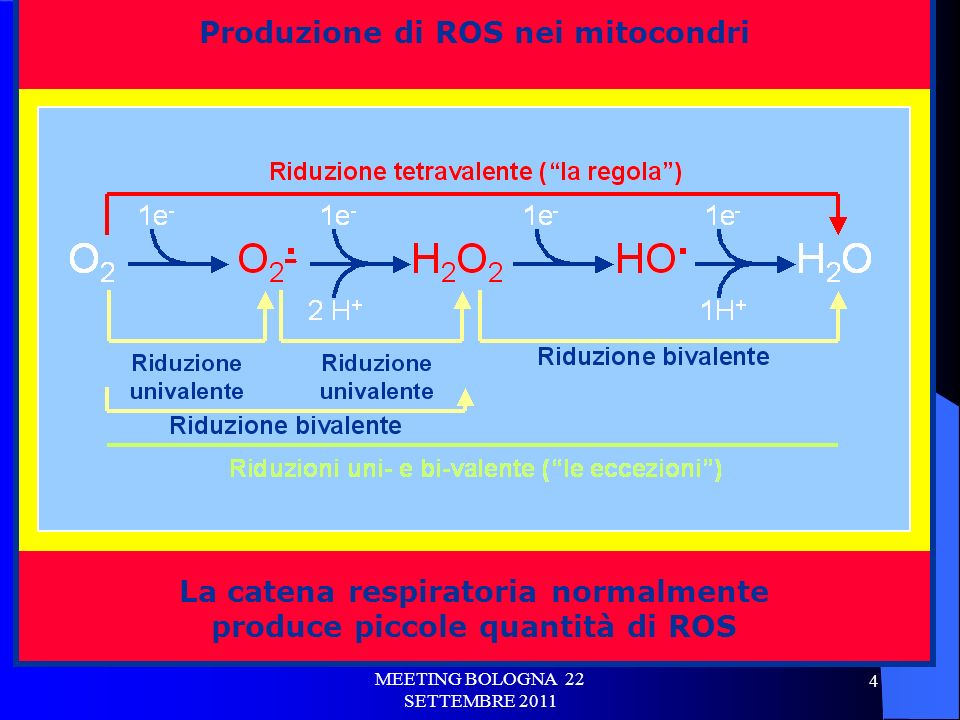 Produzione di ROS nei mitocondri