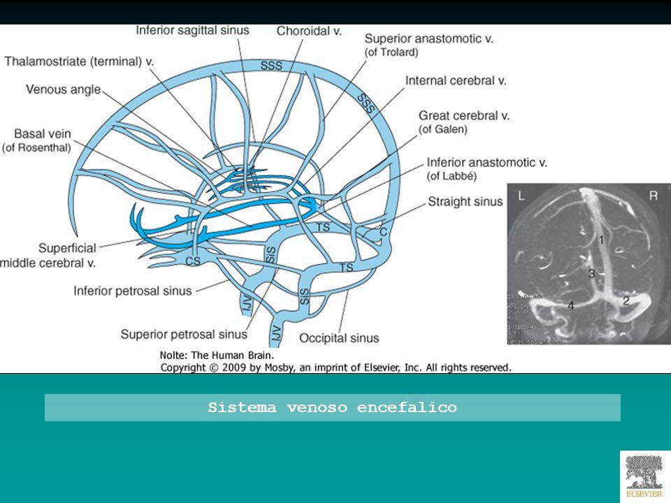 Sistema venoso encefalico