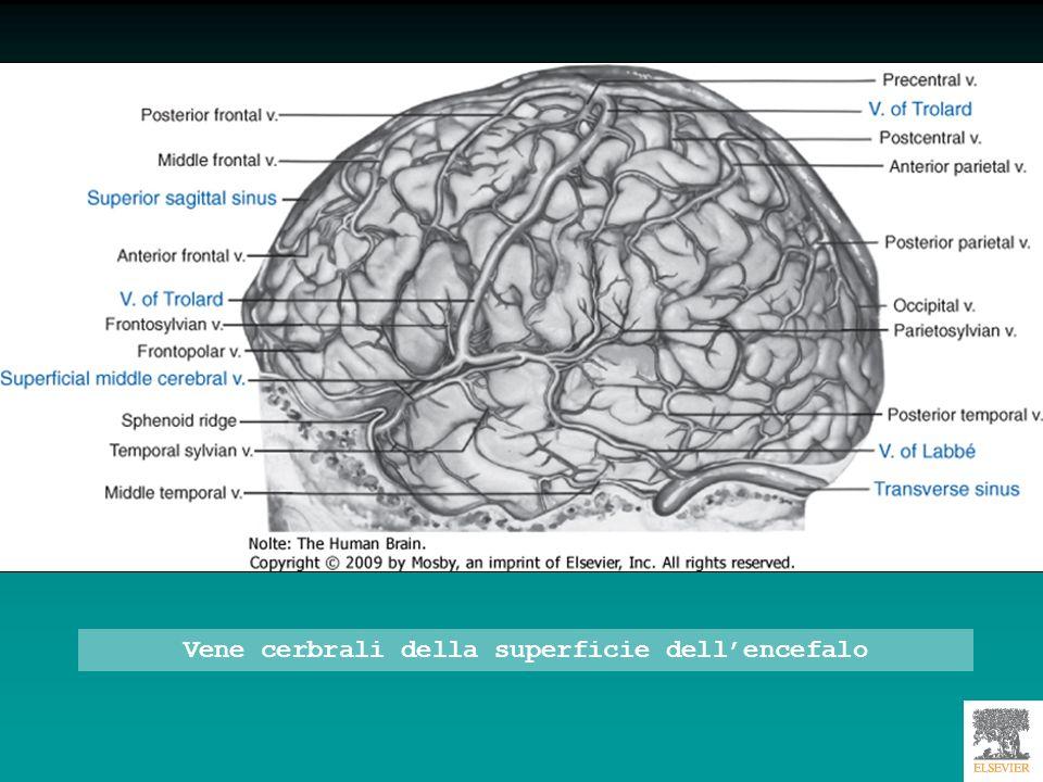 Vene cerbrali della superficie dell'encefalo