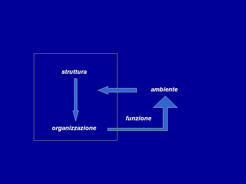 struttura ambiente funzione organizzazione