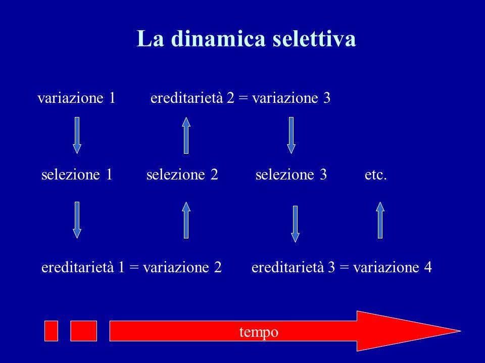 La dinamica selettiva variazione 1 ereditarietà 2 = variazione 3