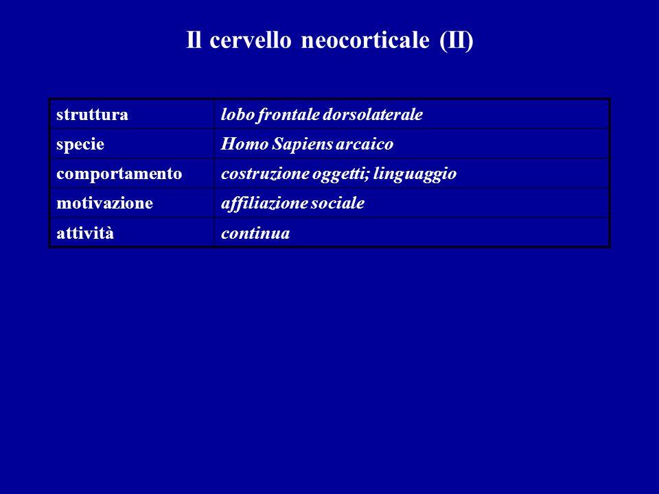 Il cervello neocorticale (II)