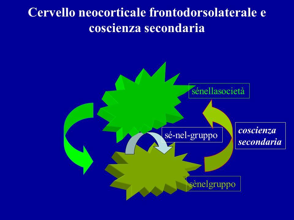 Cervello neocorticale frontodorsolaterale e coscienza secondaria