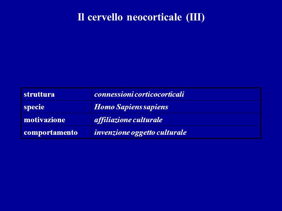 Il cervello neocorticale (III)