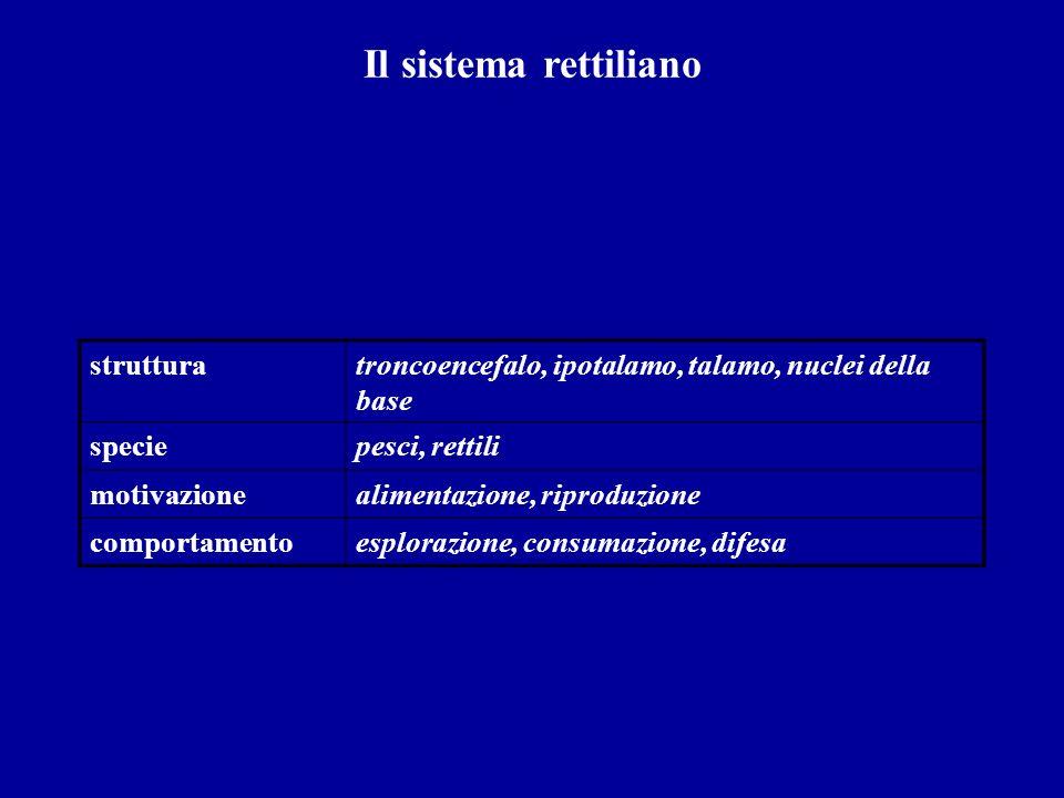 Il sistema rettiliano struttura
