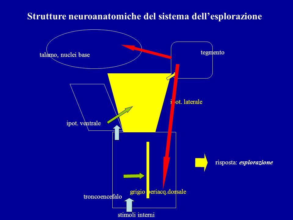 Strutture neuroanatomiche del sistema dell'esplorazione
