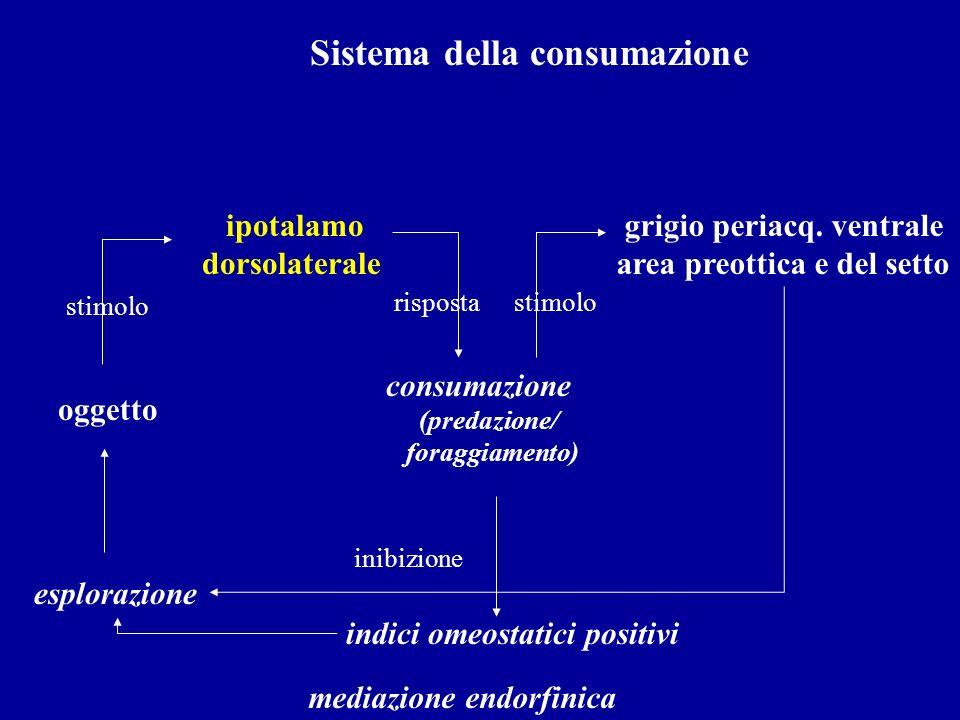 Sistema della consumazione