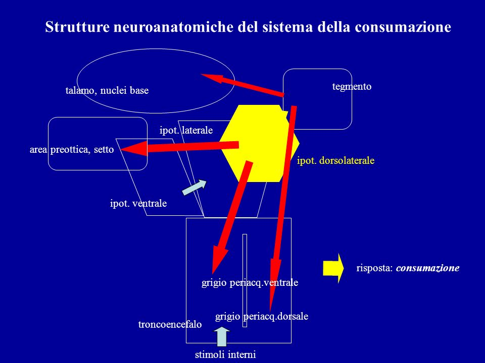 Strutture neuroanatomiche del sistema della consumazione