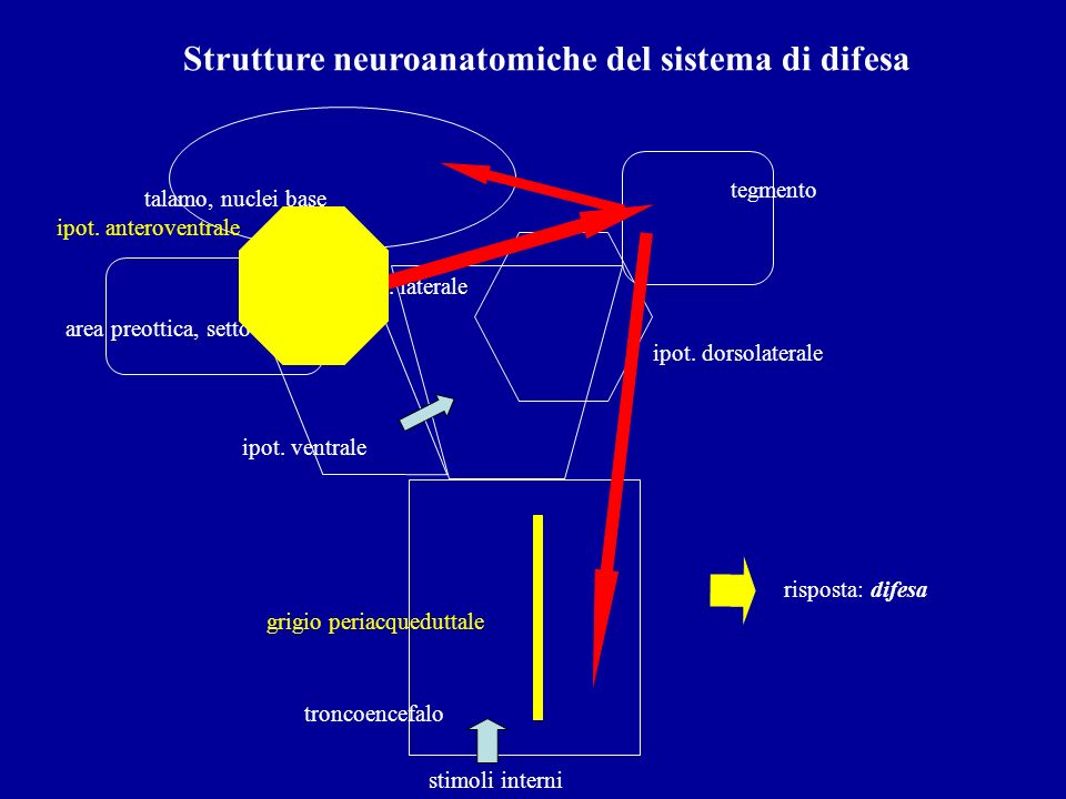 Strutture neuroanatomiche del sistema di difesa