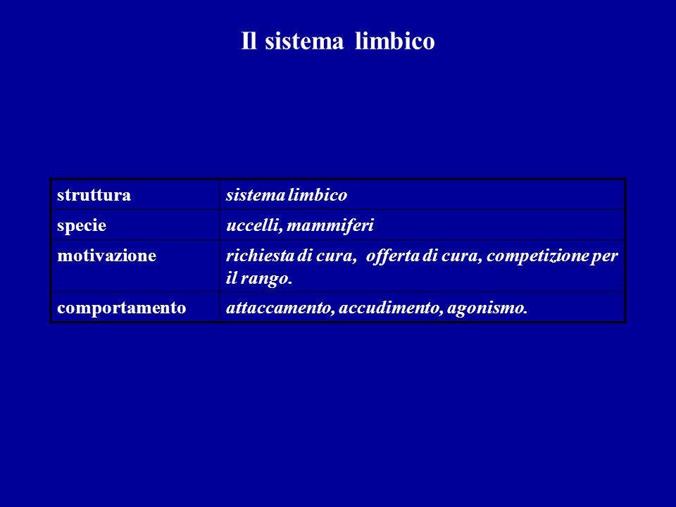 Il sistema limbico struttura sistema limbico specie uccelli, mammiferi