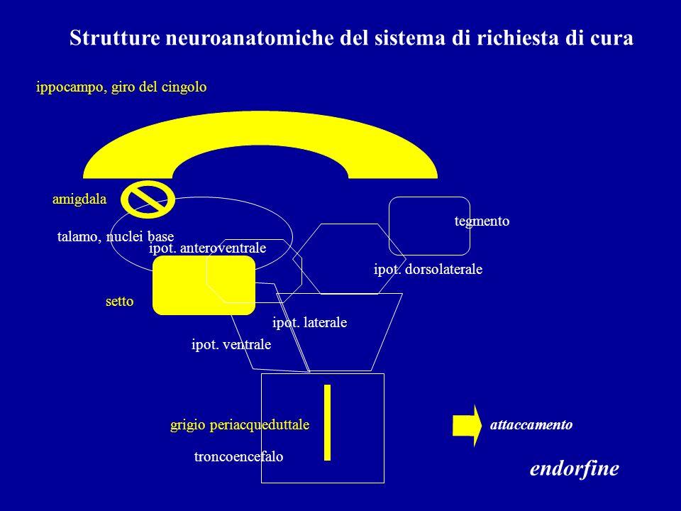 Strutture neuroanatomiche del sistema di richiesta di cura