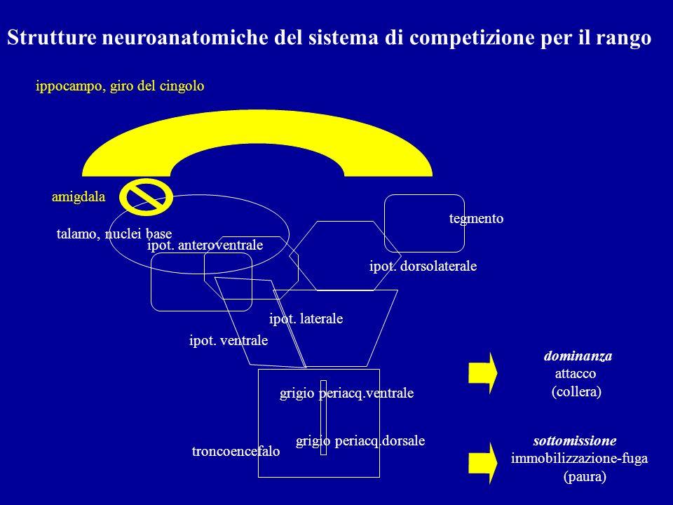 Strutture neuroanatomiche del sistema di competizione per il rango