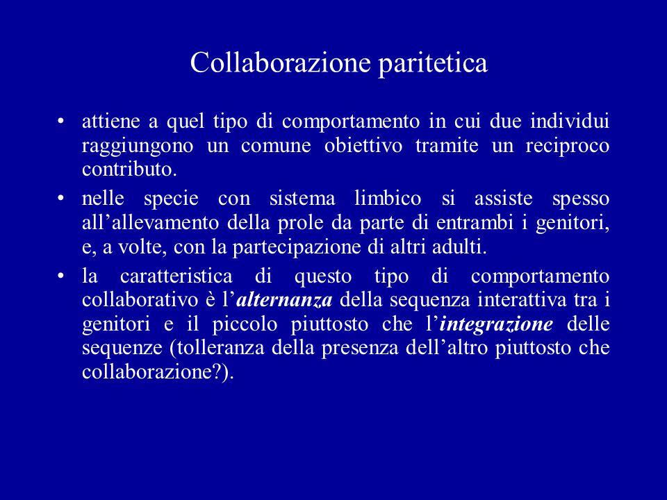 Collaborazione paritetica