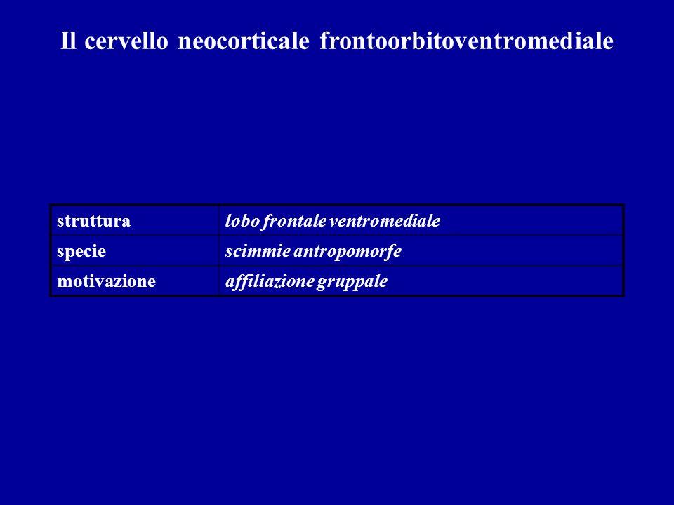 Il cervello neocorticale frontoorbitoventromediale