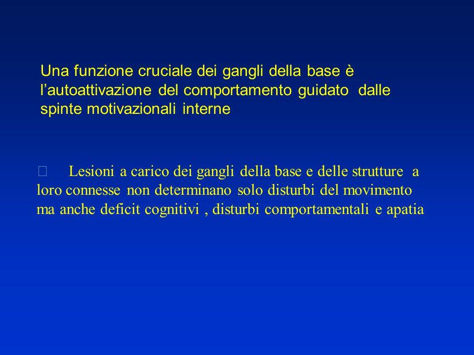 Una funzione cruciale dei gangli della base è l'autoattivazione del comportamento guidato dalle spinte motivazionali interne