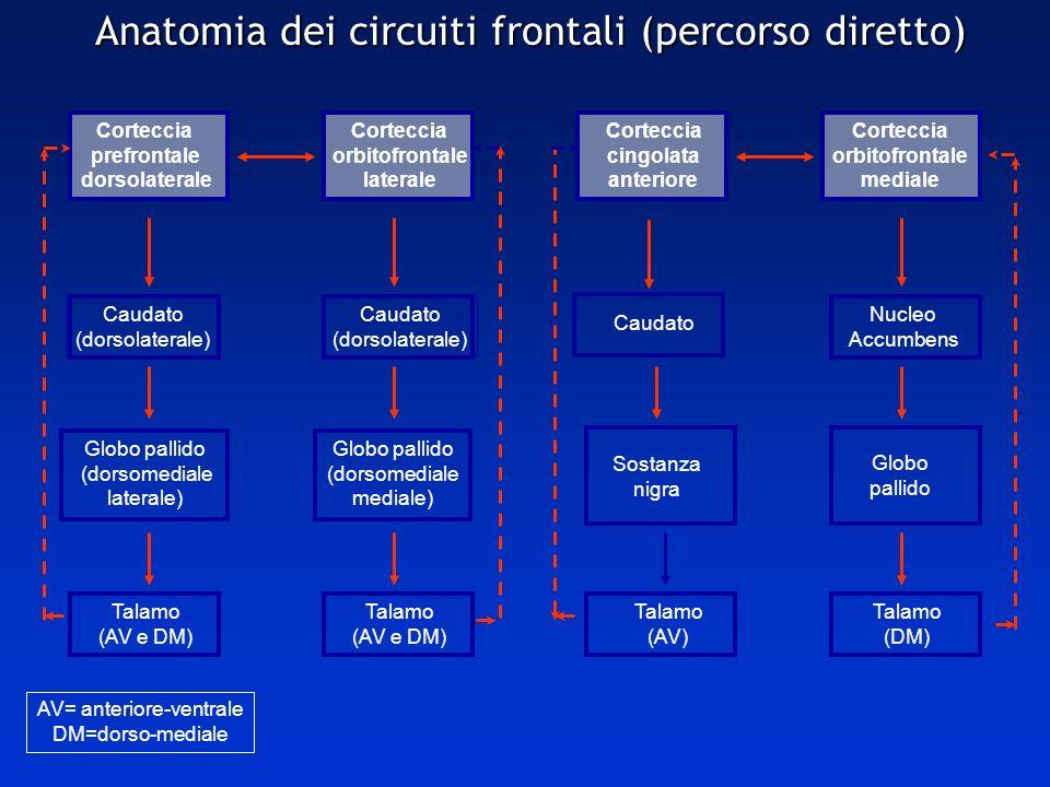 Anatomia dei circuiti frontali (percorso diretto)