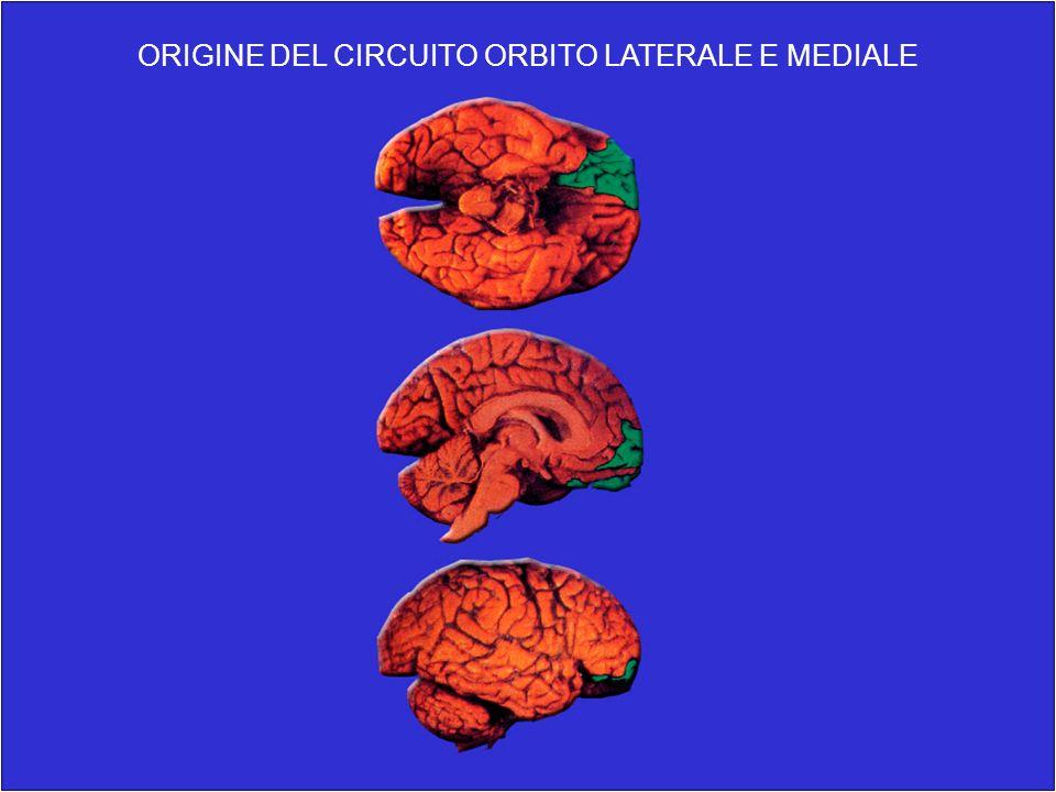 ORIGINE DEL CIRCUITO ORBITO LATERALE E MEDIALE