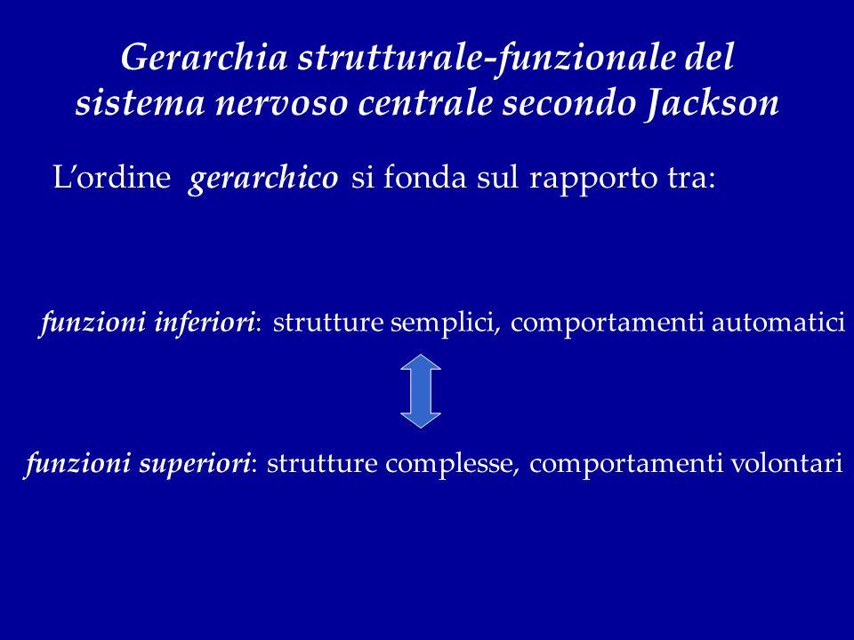 Gerarchia strutturale-funzionale del sistema nervoso centrale secondo Jackson