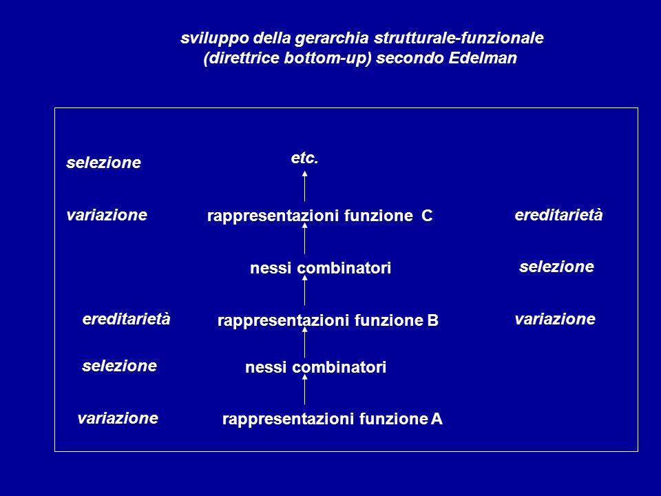 sviluppo della gerarchia strutturale-funzionale