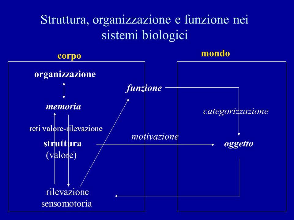Struttura, organizzazione e funzione nei sistemi biologici