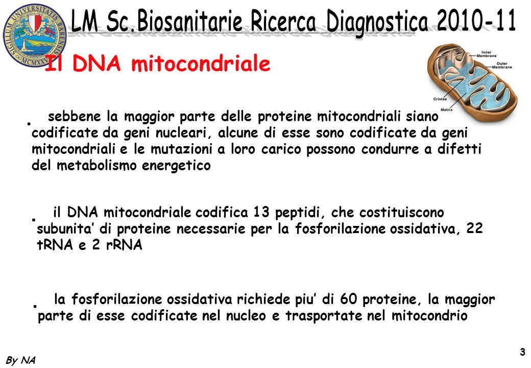 Il DNA mitocondriale