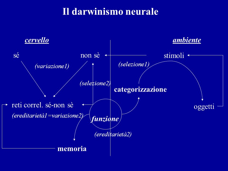 Il darwinismo neurale (ereditarietà2) cervello ambiente sé non sè