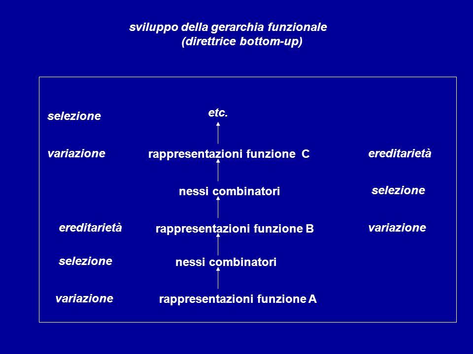 sviluppo della gerarchia funzionale