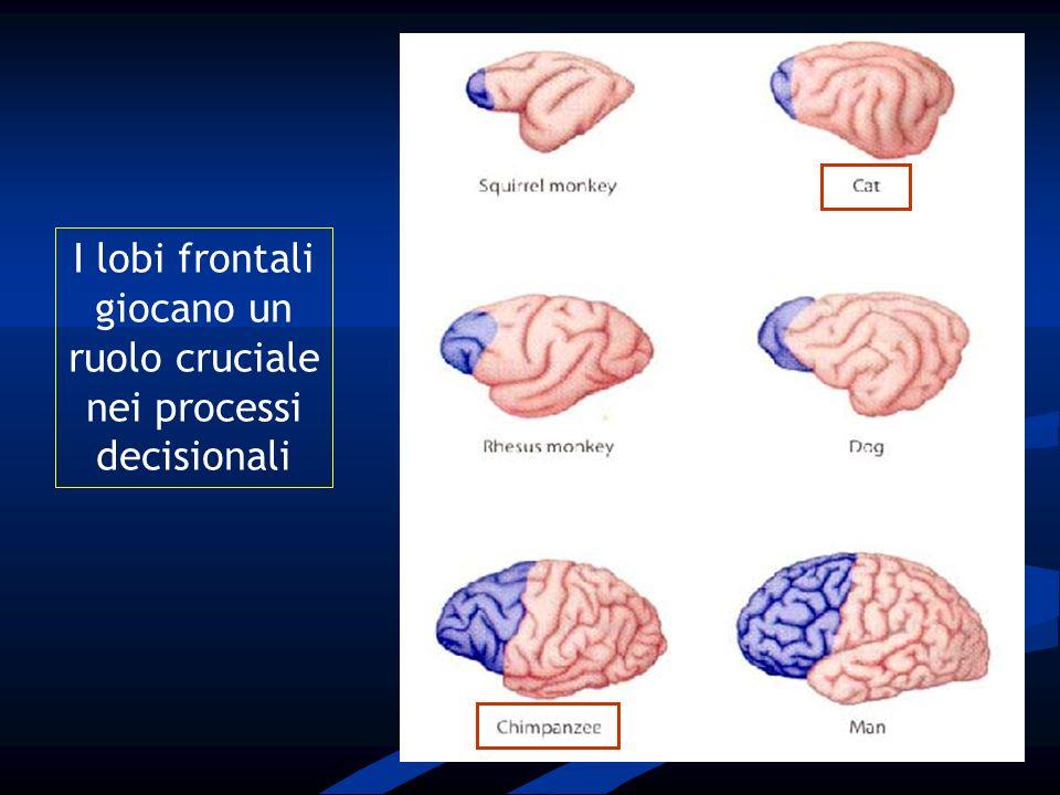 I lobi frontali giocano un ruolo cruciale nei processi decisionali