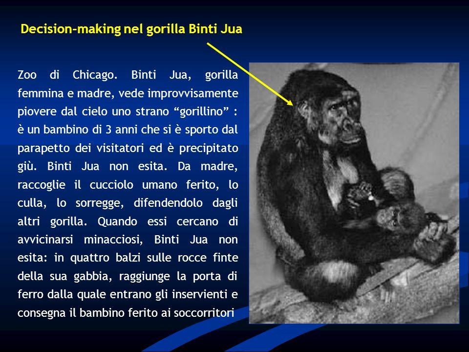 Decision-making nel gorilla Binti Jua