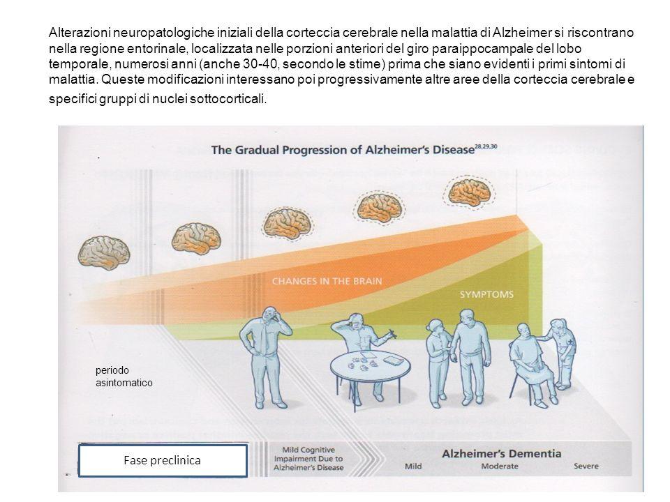 Alterazioni neuropatologiche iniziali della corteccia cerebrale nella malattia di Alzheimer si riscontrano nella regione entorinale, localizzata nelle porzioni anteriori del giro paraippocampale del lobo temporale, numerosi anni (anche 30-40, secondo le stime) prima che siano evidenti i primi sintomi di malattia. Queste modificazioni interessano poi progressivamente altre aree della corteccia cerebrale e specifici gruppi di nuclei sottocorticali.