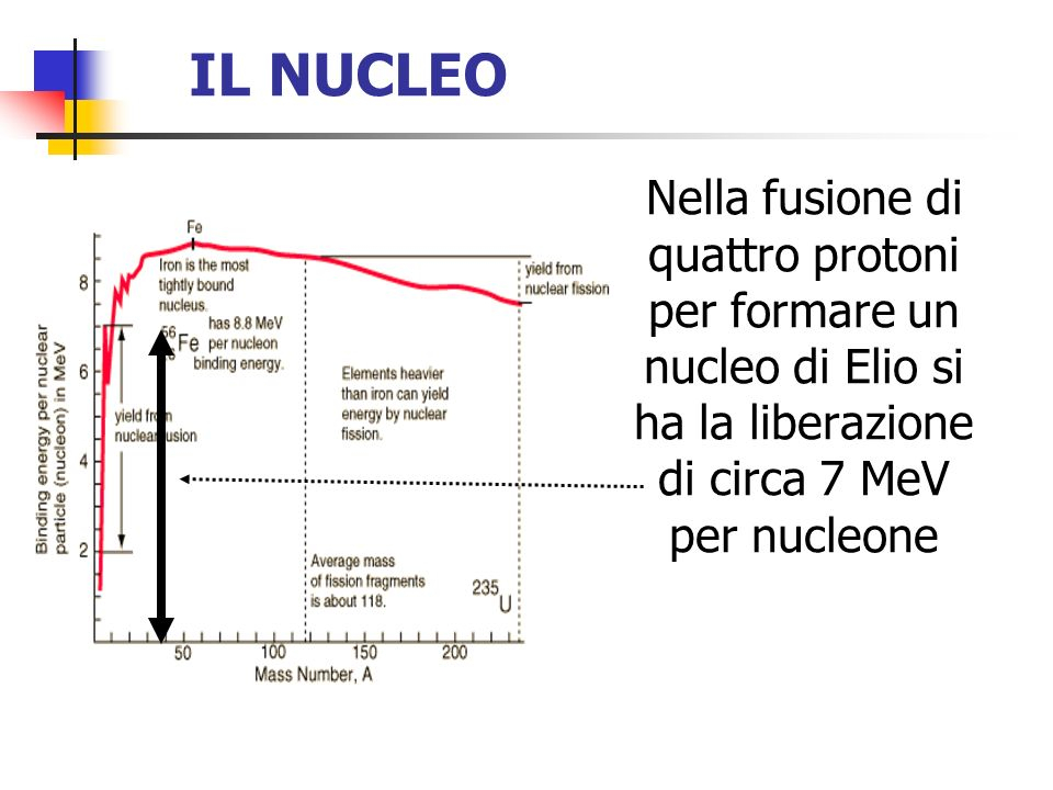 IL NUCLEO Nella fusione di quattro protoni per formare un nucleo di Elio si ha la liberazione di circa 7 MeV per nucleone.