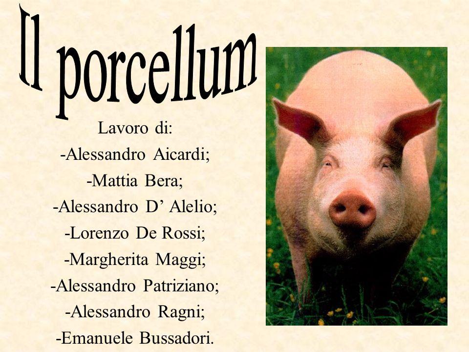 Il porcellum Lavoro di: -Alessandro Aicardi; -Mattia Bera;