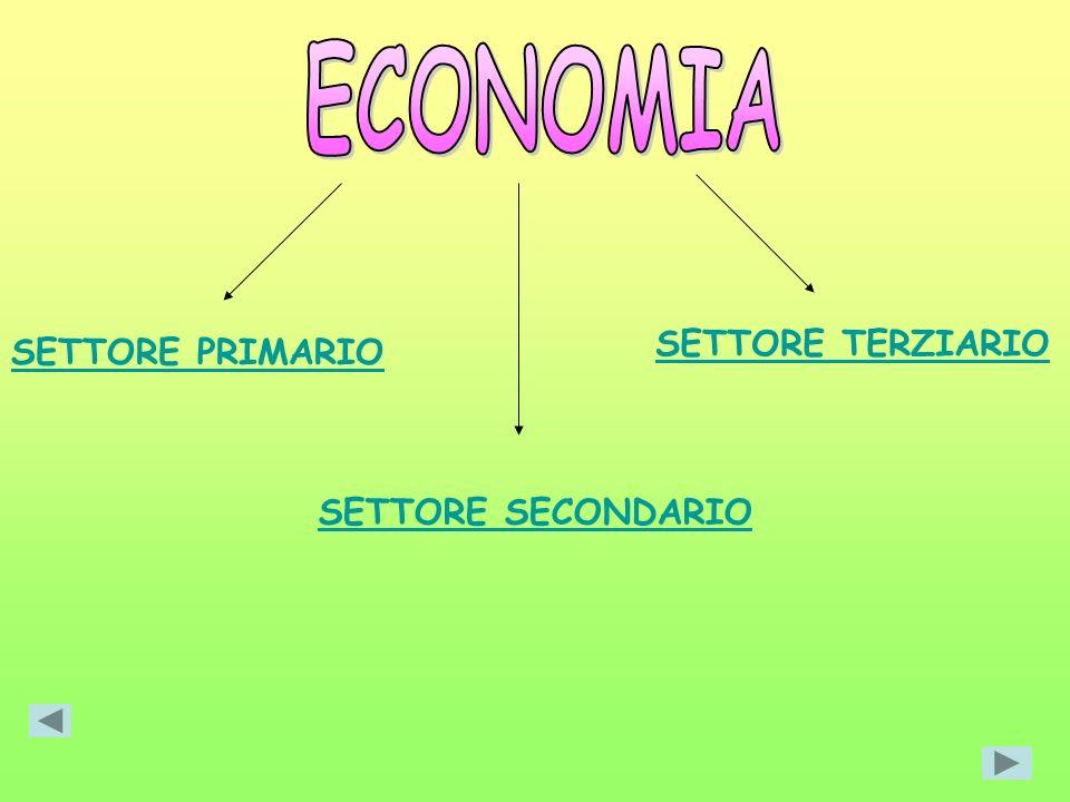 ECONOMIA SETTORE TERZIARIO SETTORE PRIMARIO SETTORE SECONDARIO