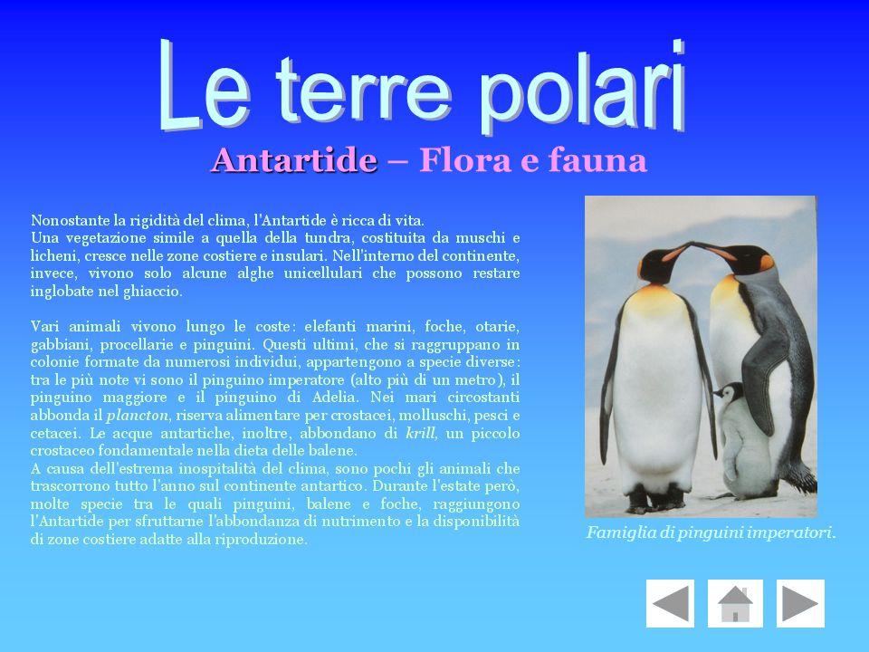 Le terre polari Antartide – Flora e fauna