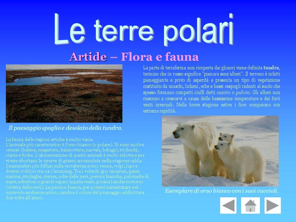 Le terre polari Artide – Flora e fauna